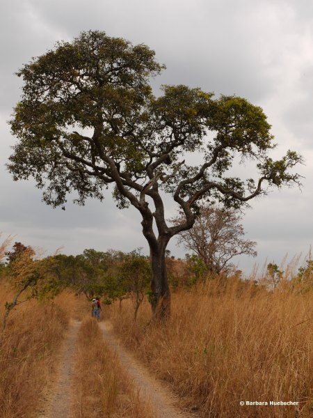 Ruvubu Nationalpark