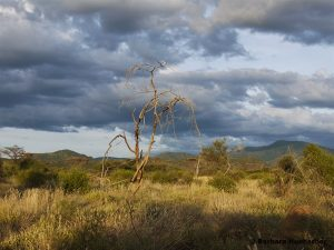 Turkana National Reserve